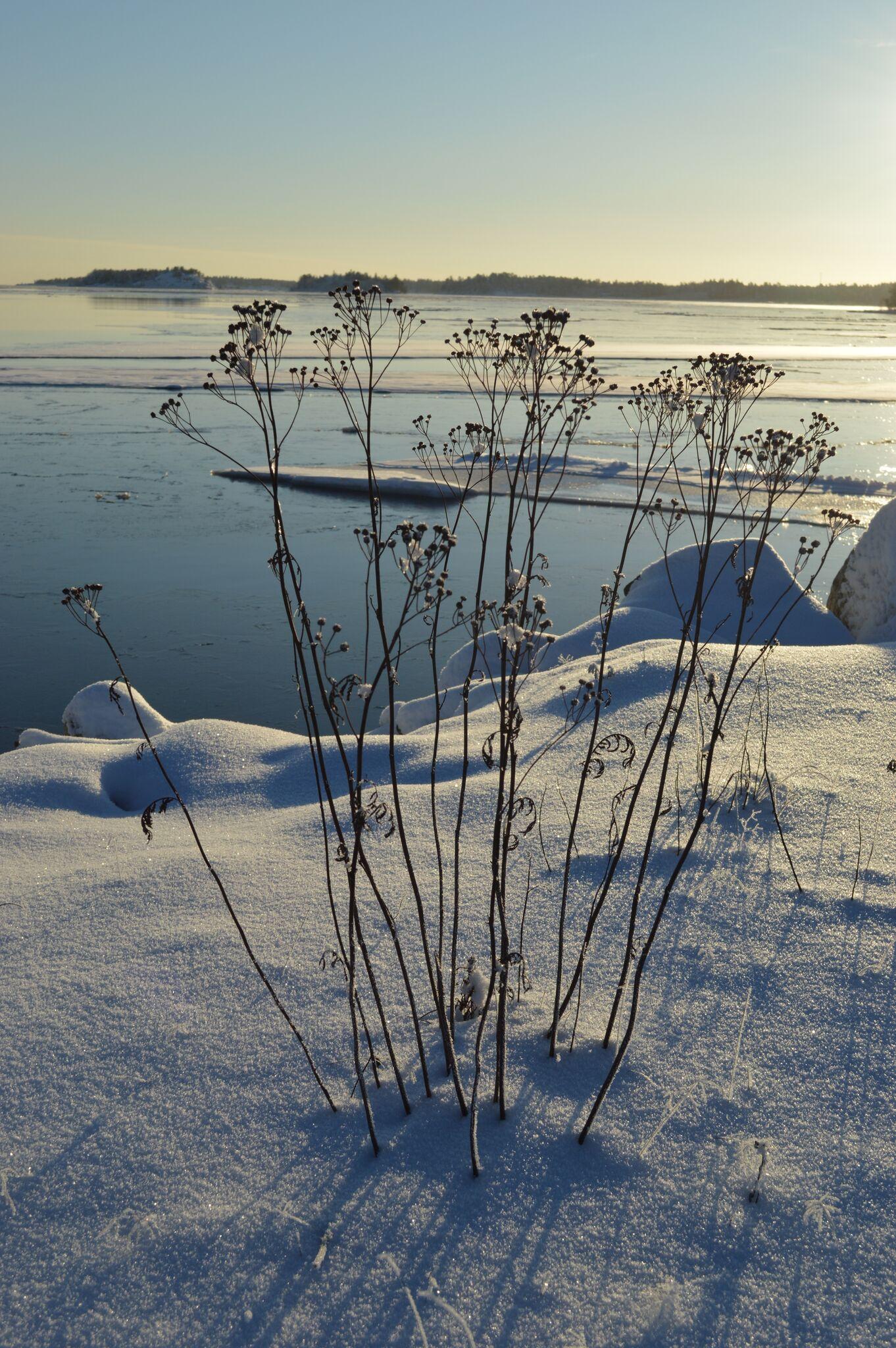 Obbola vinter 6